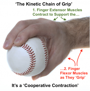 Kinetic Chain of Grip